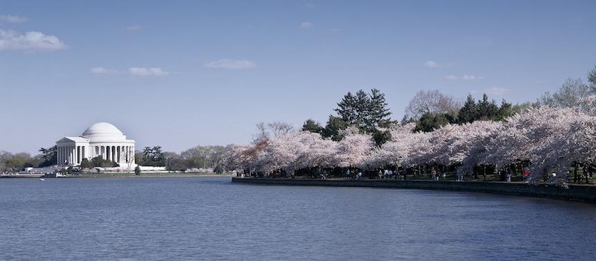Cherry Blossom : où en profiter à Washington ?
