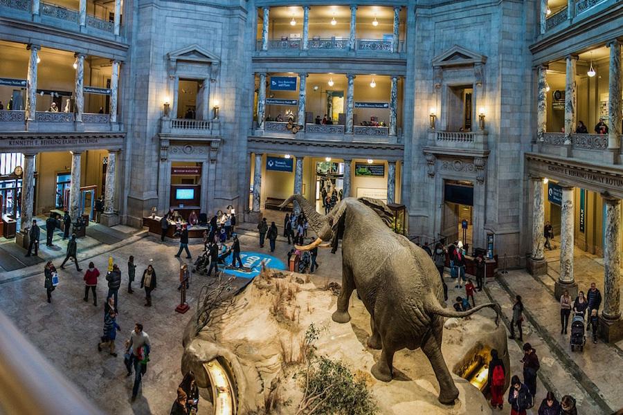 Deux idées de musées en famille à Washington