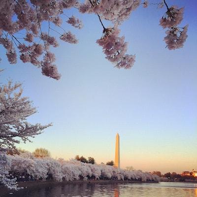 Le Washington Monument lors du Cherry Blossom