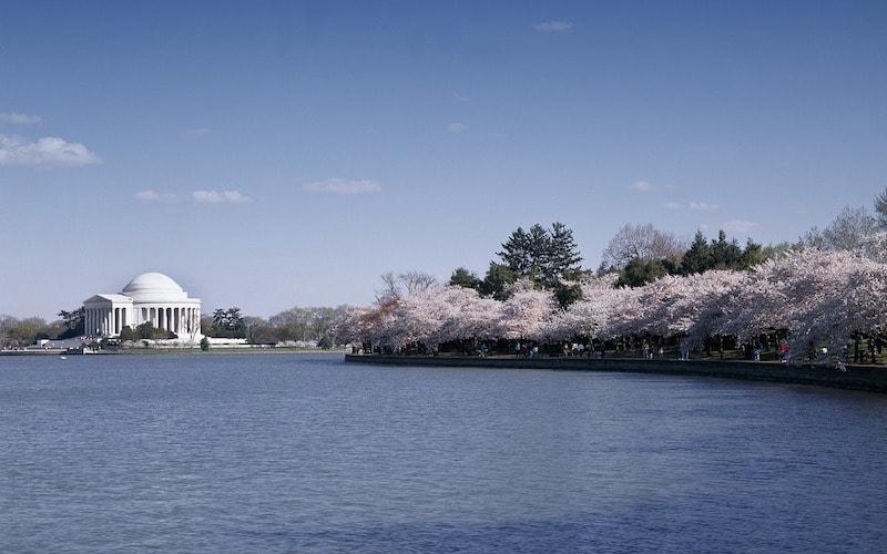 Le Jefferson Memorial lors du Cherry Blossom