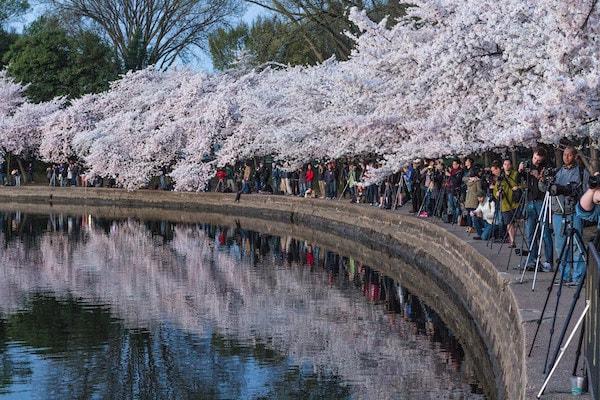 Des photographes autour du Tidal Basin pour photographier le Cherry Blossom