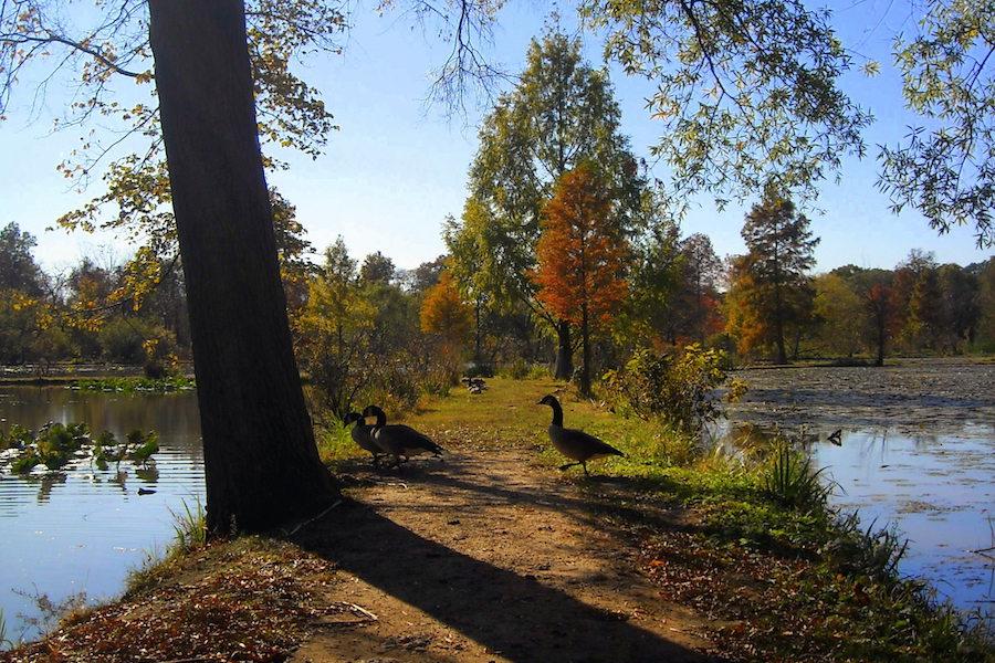 Kenilworth Park & Aquatic Garden
